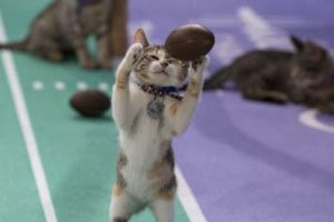 Kittens Take Over Puppy Bowl!