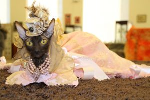Feline Museum Hosts Lavish Victorian Fashion Show