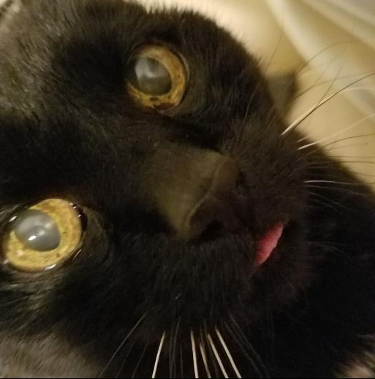 spiderblep_resized