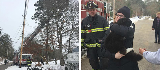 Wareham Cat Stuck for Days in Tree during Snowstorm