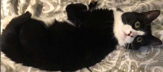 The Kitten Nobody Wanted Finds Home of His Dreams