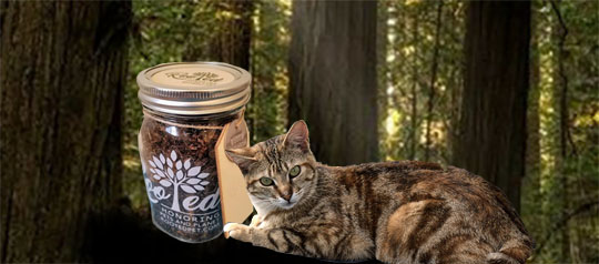 Free Tree Planting to Memorialize Your Cats