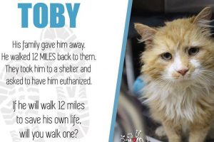 Toby Walked 12 Miles to Get Back to the Family That Hated Him