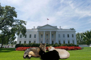 Kittehs Living in D.C. Are Standing Up to Be Counted