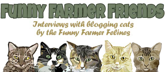 feline-funny-farmer-friends Taylor