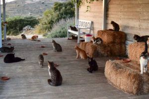 Dream Job: Cat Wrangler on Greek Island