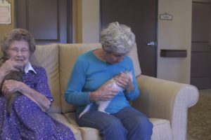 Seniors and Shelter Partner in Socialization