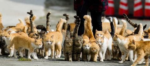 Can Stray Cats Save This Taiwan Town?
