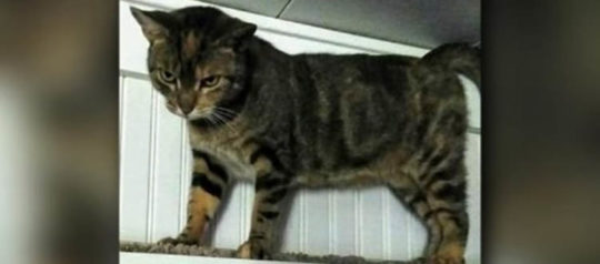 Stalked by Cat with 4-Year Old Surprise