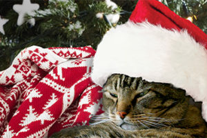 10 Last-Minute Stocking Stuffers for Fluffy