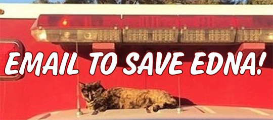 URGENT ACTION NEEDED to Save Fire Dept. Cat from Eviction