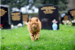 Cemetery Cat Goes Underground