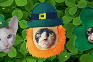 17 Ways to Catify St Paddy's Day