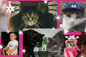 The Golden Age of Cat Blogging: Gone But Not Forgotten
