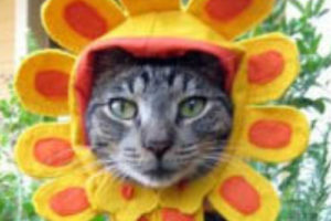 9 Ways for Kittehs to Spring into Summer