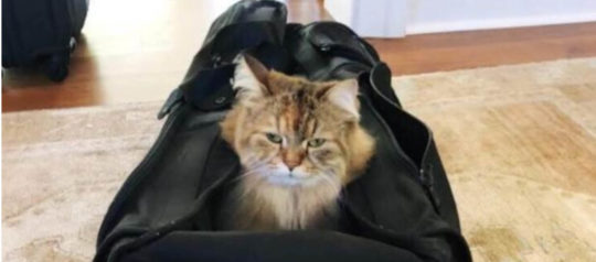 This Star Hikes with Cats in Backpacks