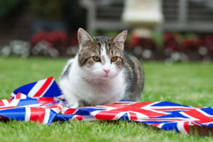 Larry the Downing St. Cat Stages Best Trump Protest