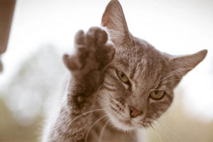 NY is First to Ban De-Clawing Statewide