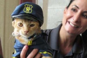 Police Dept Cat Gets His Pink Slip