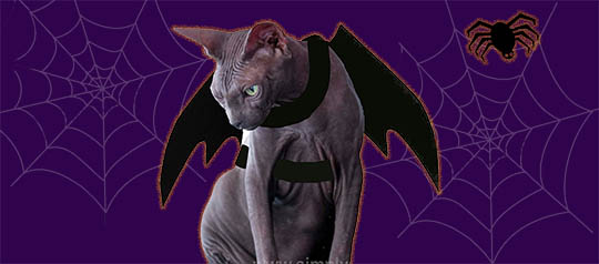 Top 10 Toppers for Halloween Cat Costume Fun