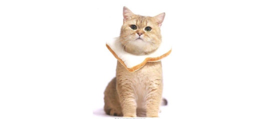 5 Halloween Costumes Your Cat Will Hate You For