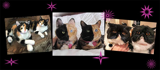 15% off Your Cuddle Clone: But You Hafta Hurry for Xmas!