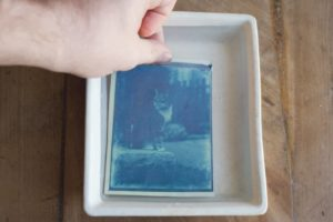 Before Cats Dominated Instagram There Were Cyanotypes
