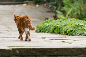 Humans Learn Where Cats Go When They're Outside