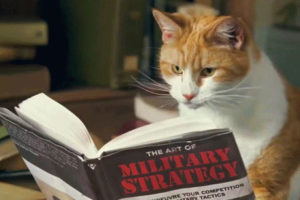 Are Cats Being Weaponized by the Navy?