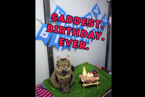 The. Saddest. PURRthday. Pawty. EVER.