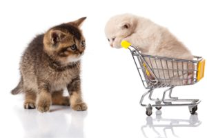 Why Cat Owners Feel Short-Changed