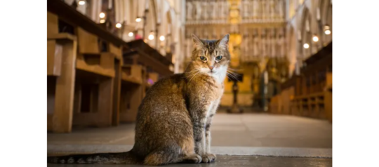 Church Cat is With The Angels